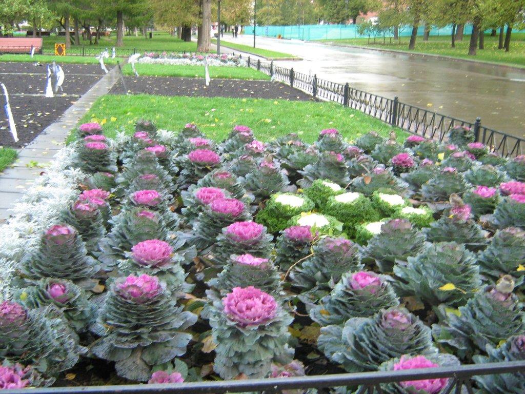 Категория декоративные растения
