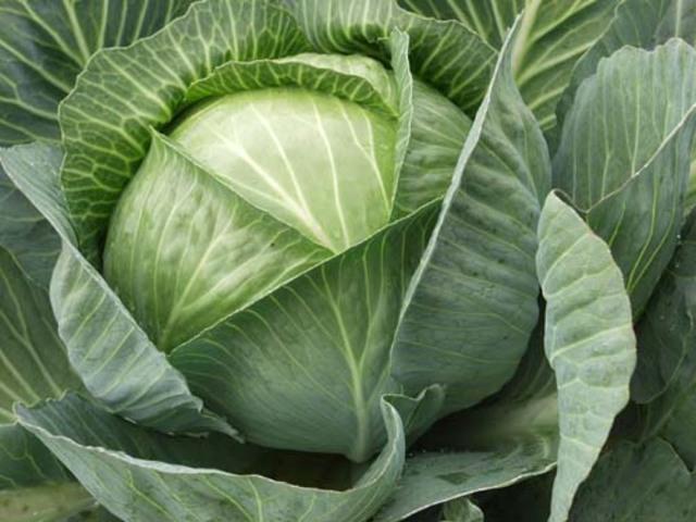 Нужны ли нижние капустные листья? ВСП. RU