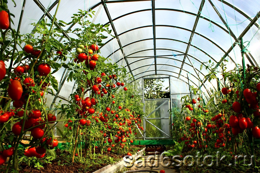 Фото парников для томатов