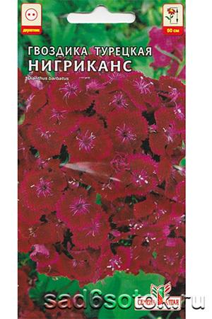 Гвоздика турецкая сорт Нигриканс (Nigrikans)