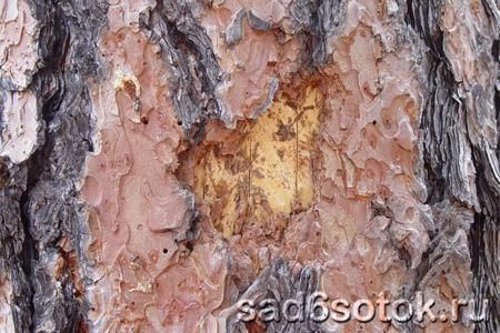 Что угрожает деревьям?