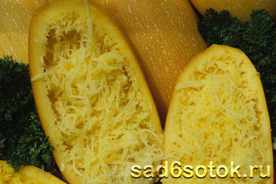 Кабачок сорт Спагетти Равиоло