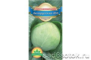 Капуста белокочанная сорт Белорусская 455