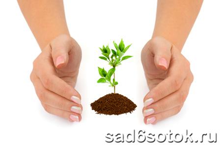 Лечение и укрепление плодовых деревьев