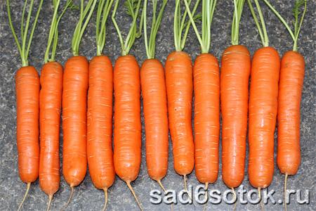 Посадка моркови весной в открытый грунт. Когда сеять, как сажать