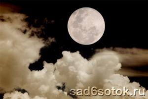 Общие сведения о луне и ее влиянии на растения