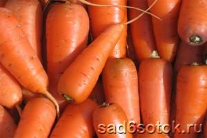 Морковь сорт Шантене