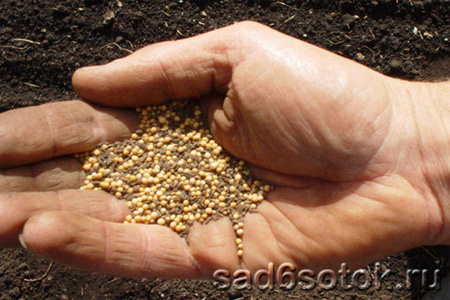 Каким семенам доверять?