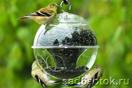 Как сохранить на участке полезных животных, насекомых и птиц?