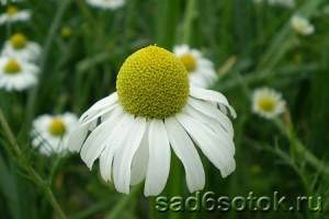 Какие растения могут быть полезны в борьбе с вредителями и болезнями?