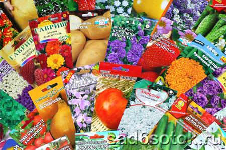 Советы по выбору и подготовке семян