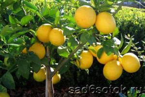 citrusovye-v-teplice-300x200.jpg