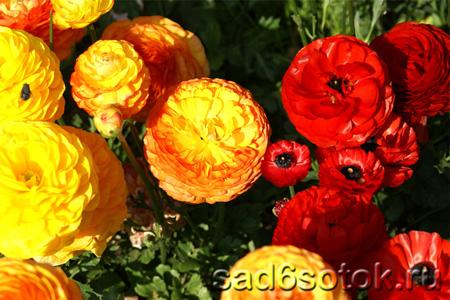 Цветы на срезку