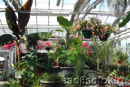 Растения для необогреваемых теплиц