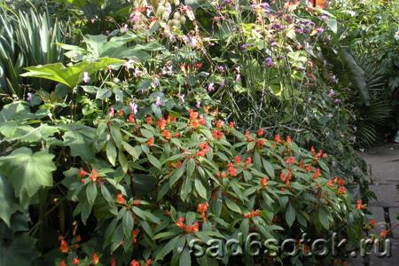 Растения для обогреваемых холодных теплиц