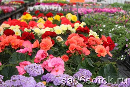 Растения для обогреваемых умеренно теплых теплиц