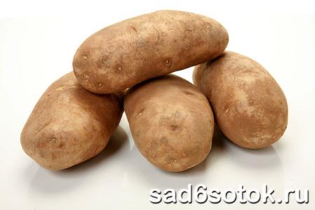 Выращиваем картофель в теплице