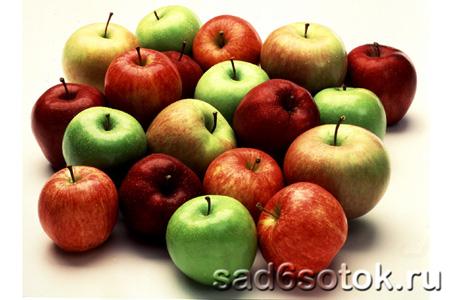 Лечебные яблоки