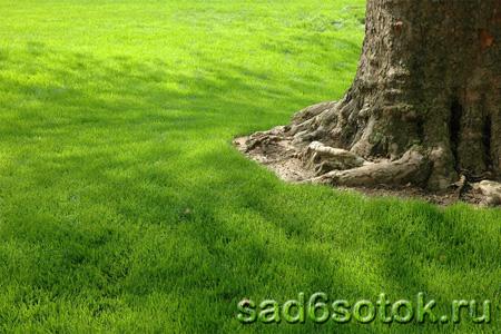 Деревья и кустарники для газонов