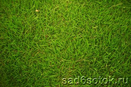 Советы по посеву газона