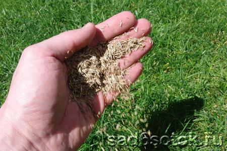 Как выбрать семена для газона