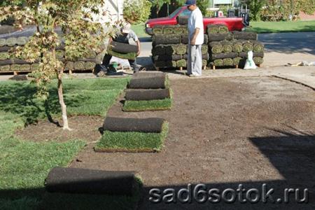 Сеяный или рулонный газон?