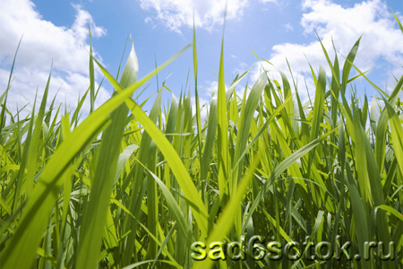 Что такое трава?