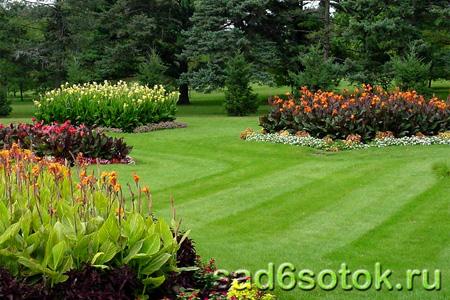 Выбор места для газона