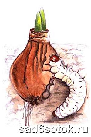 Гусеницы тонкопрядов