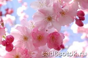 Цветут, а плодов не дают