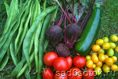 Какие овощи выращивать?