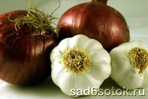 Как сохранить лук и чеснок