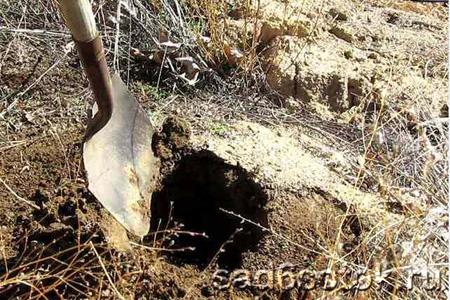Копать или не копать в августе?