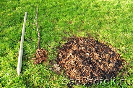 Удобрения для осенней посадки