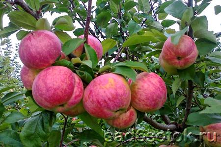 Тест плодовых деревьев