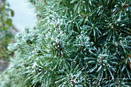 Украшаем зимний сад с помощью деревьев