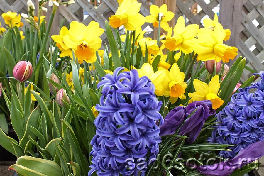 Как подобрать цвета и цветы для весеннего сада