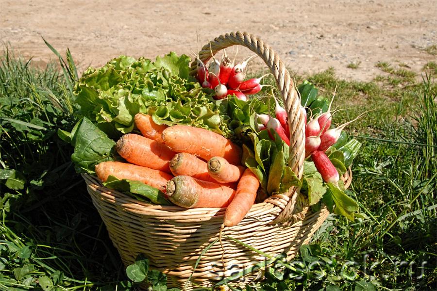 Экологическое огородничество