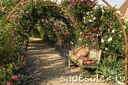 Аллеи с розами