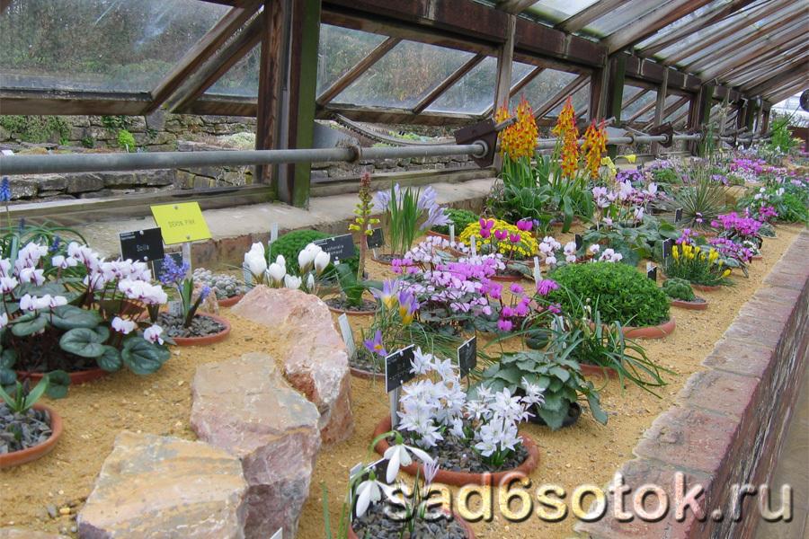 Коллекция цветов ботанического сада