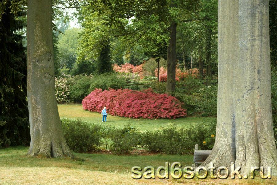 Тайные Сады