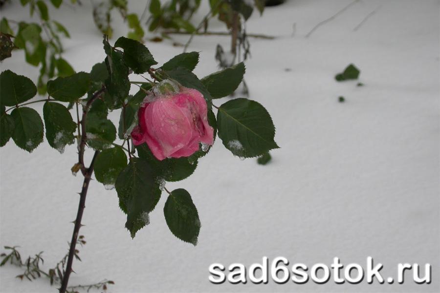 podgotovka-rastenii-zima