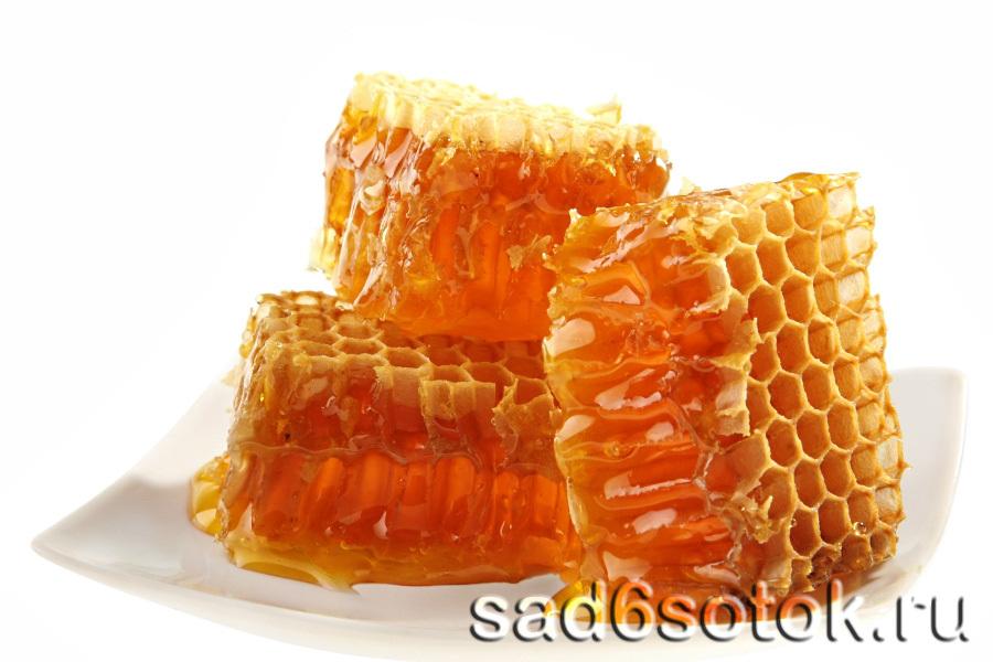 Мед в пчелиных сотах