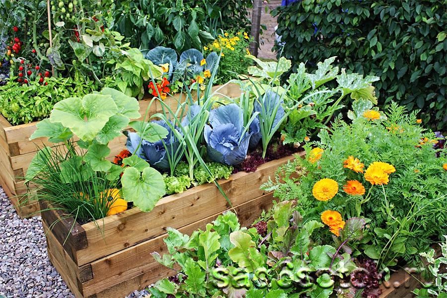 Смешанные посадки овощей и трав