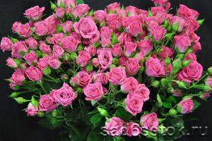 Роза группы спрей сорт Любимая Лидия (Lovely Lydia)