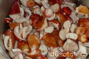 Рецепты приготовления блюд из сыроежек