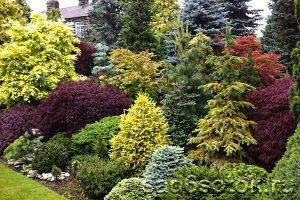 Разные виды елей в оформлении сада