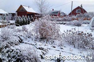 Первый снег на садовом участке